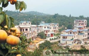 月柿铺就小康路 产业托起新农村