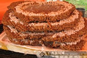 营养价值极高的蜂蛹