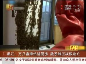 蜂王逃亡 万只蜜蜂钻厨房
