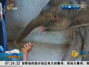 初生小象遭妈妈踩踢 独自流泪5小时