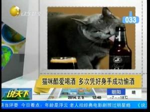 猫咪凭好身手成功偷酒