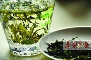 """喝春茶养生不必盲目追求芽头茶 当心买到""""染色茶"""""""