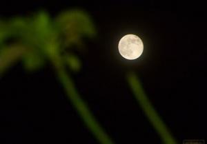 网友拍摄2014年最大最圆的月亮