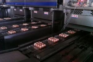 [走进神丹]保洁蛋生产工艺之包装