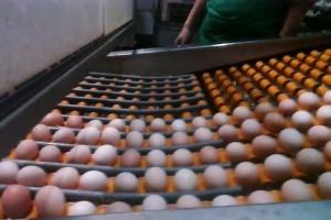 [走进神丹]保洁蛋生产工艺之鸡蛋上阵清洗