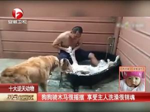 狗狗骑木马很摇摆 享受主人洗澡很销魂
