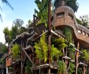 """居家设计有创意 打造""""树屋"""""""
