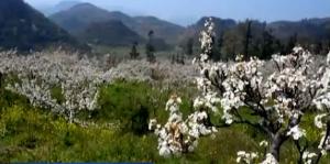 春季到贵州来看花