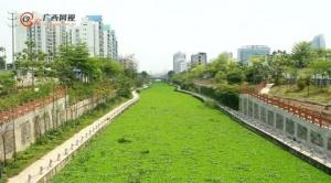 """南宁高新区可心江的""""绿帽子""""正在被摘除"""