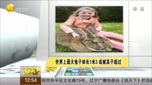 世界上最大兔子体长1米3 或被其子超过