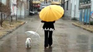 雨天遛狗 主人小狗都撑伞
