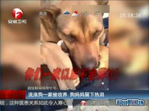 流浪狗一家被收养 狗妈妈流下热泪