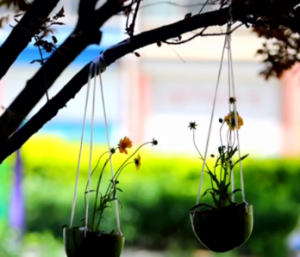 西瓜皮做盆栽 创意又美观