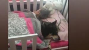 萌宝狗狗一起睡搞笑一幕温馨