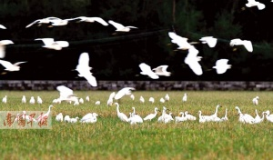 上千只猛禽飞越北海冠头岭 多方为猛禽迁徒护航