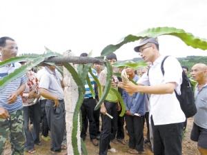 邕宁区:企业进驻改变山村命运