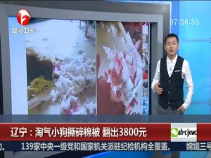 淘气小狗撕碎棉被 翻出3800元