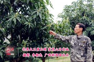 脸谱:芒果大王黄立刚 变荒山为宝地