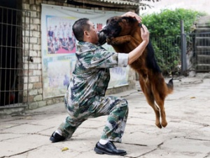 男子对狗弹琴驯服烈犬 花4年同时训出200只狗(图)