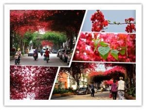 高清:看南宁平西路的空中花园 赶一场春天的约会