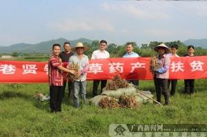 上林巷贤镇兴塘村掀起了草药种植热潮