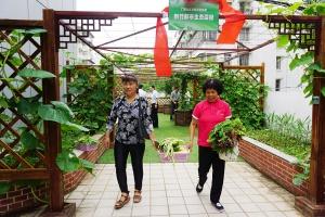 高清:空中菜园丰收 都市人采摘一份买不到的喜悦