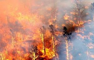 美南加州山火致8万人疏散 已进入紧急状态