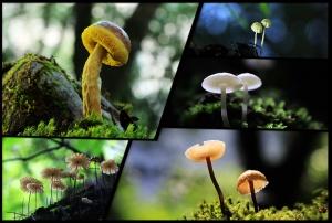 """高清:乐业现神秘童话世界 藏在森林中的""""小雨伞"""""""