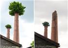 """超强台风""""莫兰蒂""""吹落""""烟囱树"""""""