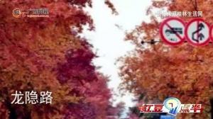 网友评出桂林市区最美10条道路