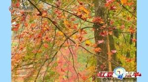 """首届石林观赏文化节  让你看到不一样的""""美"""""""