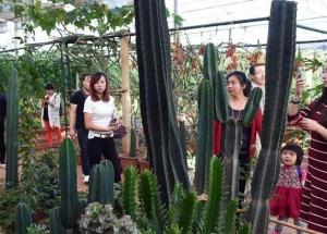 云南富民:美丽乡村生态休闲游