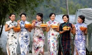 高清:丰收桔园美女秀旗袍