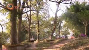 浪洲屯:千年古树助力打造特色农业观光旅游