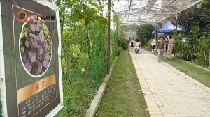 钦南区:田园牧歌唱响旅游新愿景
