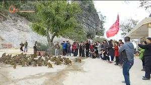 在巴腊猴山与猴子们来一次亲密接触吧