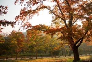 上思十万大山森林公园枫叶风情万种
