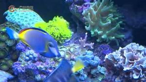 广西大学海洋学院用珊瑚礁叩开大海的奥秘之门
