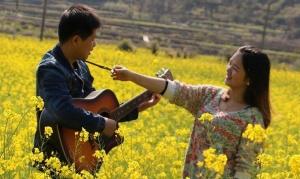 河池贺州阳光灿烂 油菜花盛开一片金黄