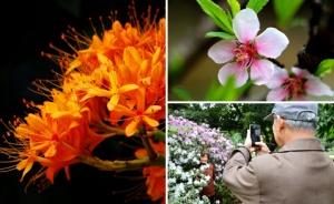 高清:春花绽放校园美 广西大学校园成花的世界