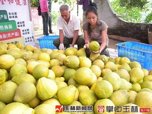 """沙田柚为何难出国门?  透视玉林农产品出口""""偏科""""问题"""