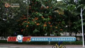 春花绽放校园美 广西大学校园成花的世界