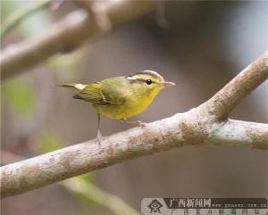 """第一届""""秘境弄岗""""国际观鸟节在广西龙州圆满闭幕"""