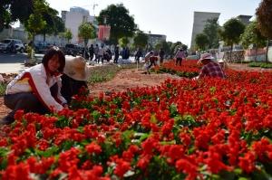 上思县加强城乡绿化美化