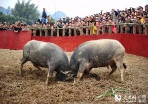 忻城县开展民间绝技大比拼 彰显民族风情魅力(图)