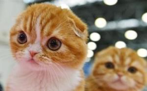 莫斯科国际宠物猫展