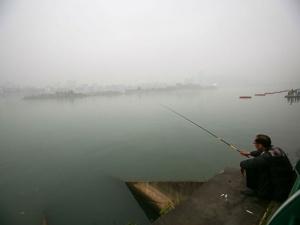 柳州萝卜洲:城市江中有秘境 人迹罕至鸟成群