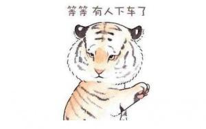 不珍惜生命 请怜惜老虎