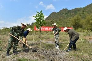 上林县开展春季植树造林活动