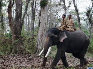 印度普查大象数量(组图)